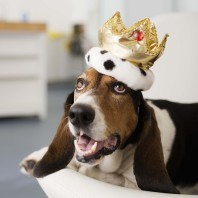 dog with royalty
